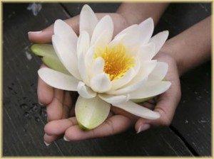 lotus-300x224