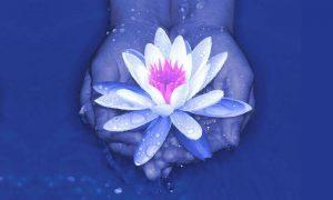 lotus1 (1)